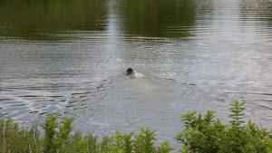 residences at rough creek lodge dog hunting foul